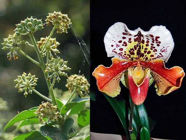 Frauenschuh und weitere Pflanzen