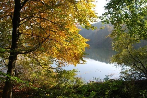 Wössner See (2) - Rund um den Wössner See (Bild 2)
