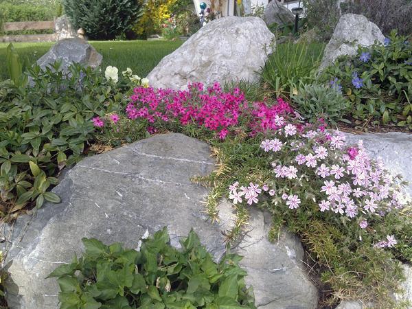 Blumenpracht (1) - Blumenpracht vor dem Gästehaus Pöppl